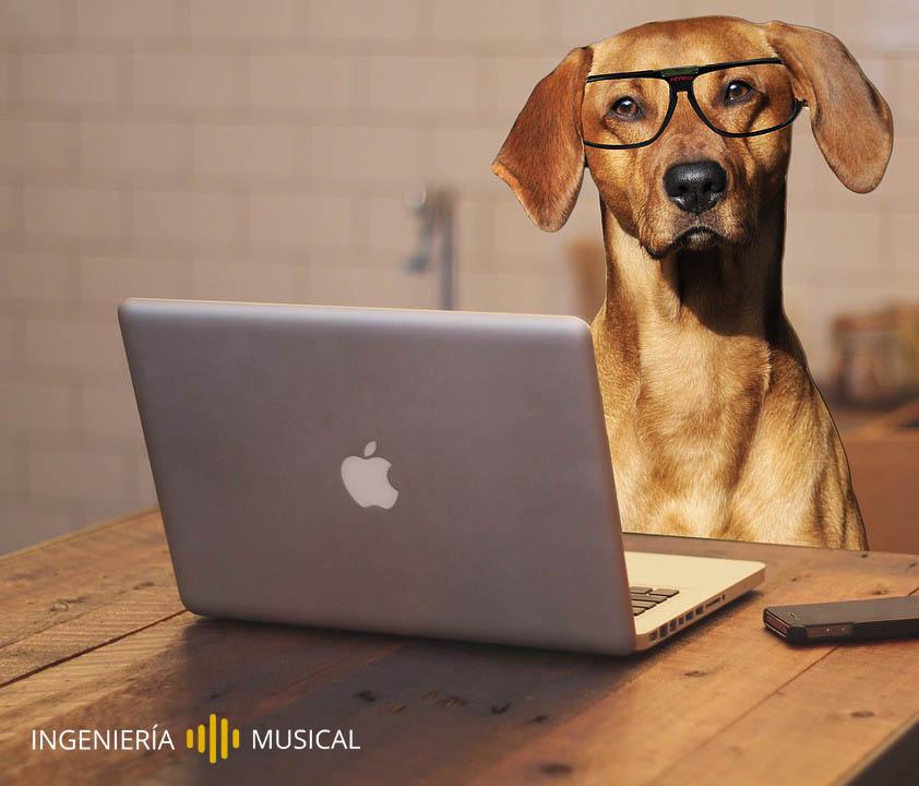 perro trabajador macbook ingenieria musical